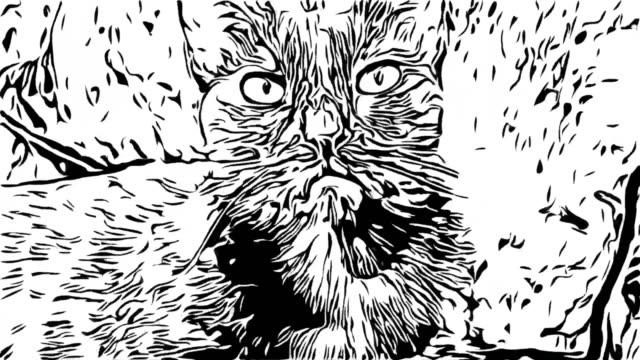 animation cartoon, schwarze katze - gekritzel zeichnung stock-videos und b-roll-filmmaterial