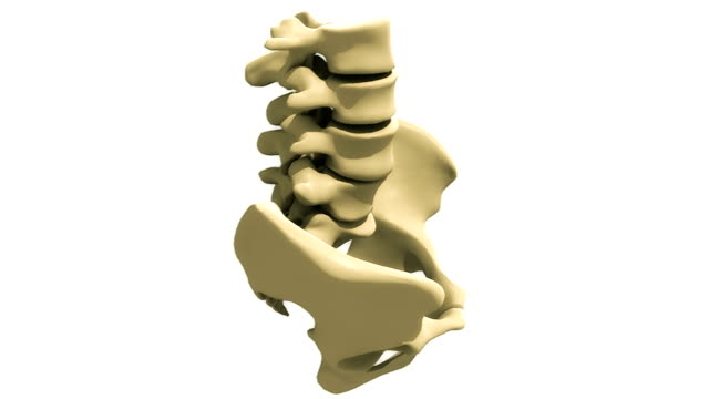 Animation depicting 360 degree rotation of the sacral region of the musculoskeletal system including sacrum and coccyx.