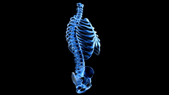 animation depicting a 360 degree rotation of the spine, ribcage, and pelvic bones in x-ray view. - brustkorb menschlicher knochen stock-videos und b-roll-filmmaterial