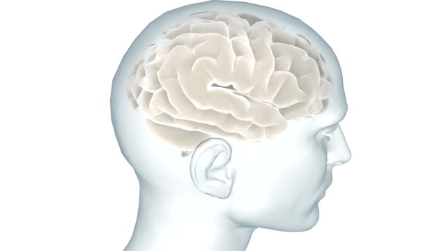 Animation depicting a 360-degree view of the brain, inside the human head.
