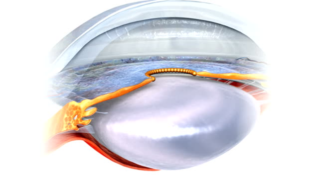 animation depicting a close up rotation of the eyes anterior chamber and posterior chamber. - eyeball stock videos and b-roll footage