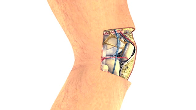 animation depicting a cutaway of the knee displaying its internal structures. the camera travels a full rotation and settles on the cutaway section. - cross section stock videos & royalty-free footage