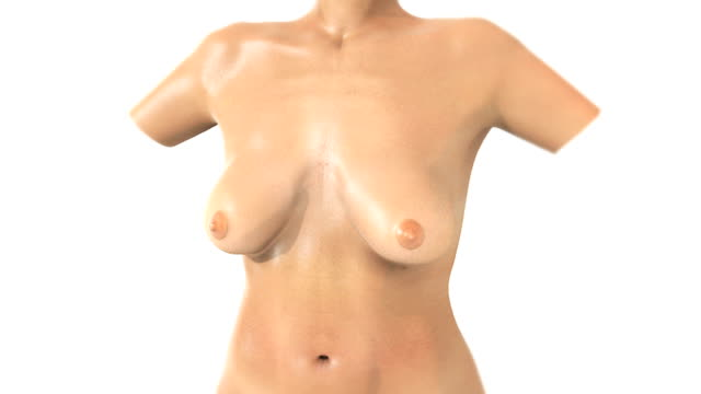 animation depicting a female torso and breasts. the camera rotates around the torso and then zooms as a section of the breast fades revealing the internal anatomy of the mammary gland. - weibliche figur stock-videos und b-roll-filmmaterial