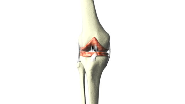 Animation depicting a full rotation of the knee joint.  As the bones rotate the camera slowly zooms into the knee joint.