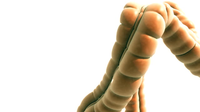 Animation depicting a full rotation of the large intestine.  The camera starts off zoomed in close and gradually zooms out to show the entire large intestine.