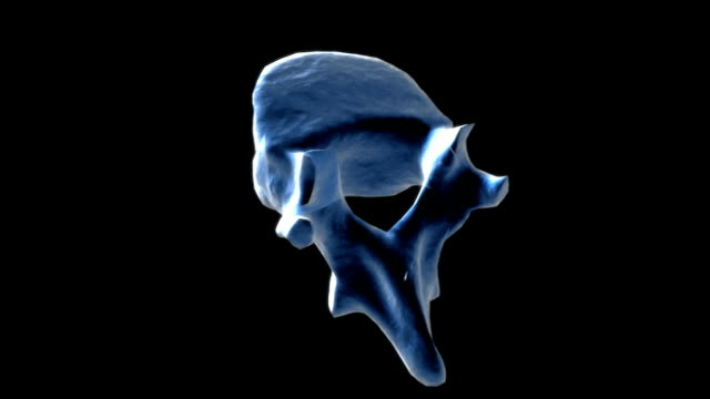 Animation depicting a half rotation of a thoracic vertebra.