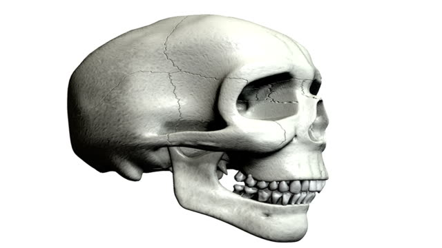 animation depicting a half rotation of the skull. the jaw is opened and closed to demonstrate movement. - parietal bone stock videos & royalty-free footage