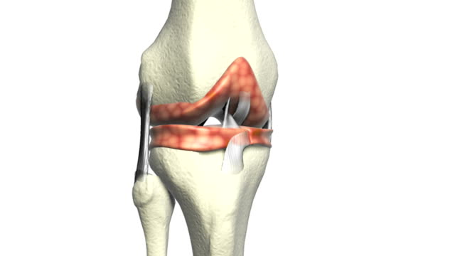 Animation depicting a pan from left to right around the knee joint.