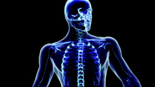 animation depicting a quarter rotation of an x-ray view of the skeletal system within the body focusing on the upper body. - brustkorb menschlicher knochen stock-videos und b-roll-filmmaterial