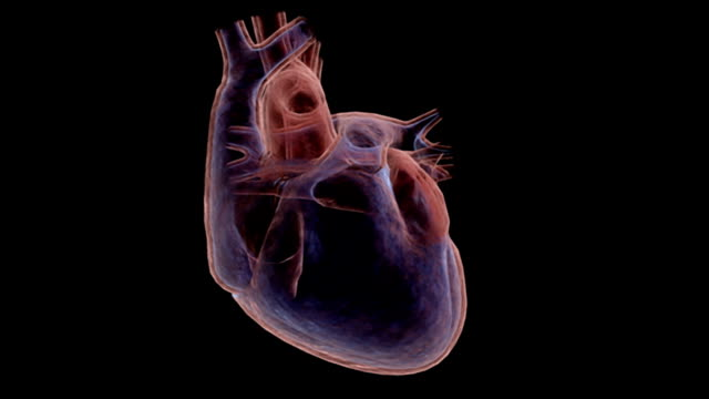animation depicting a quarter rotation of the heart in an x-ray view. - superior vena cava stock videos & royalty-free footage