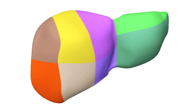 animation depicting a quarter rotation of the liver with the different segments of the liver color coded. - biomedical illustration stock videos & royalty-free footage