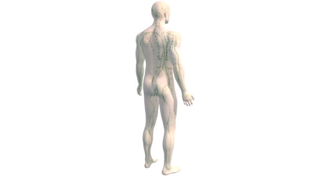 Animation depicting a rotation around the lymphatic system within a semi-transparent human body. The camera zooms in on the thorax towards the end of the animation.