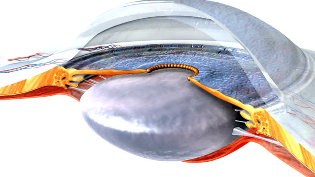 animation depicting a rotation of the eyes anterior chamber and posterior chamber. elements present include the lens and cornea. - cornea stock videos and b-roll footage
