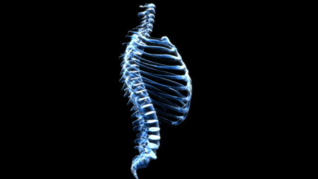 animation depicting a rotation of the ribcage and the spinal column. the bones fade into an x-ray view and back again as the animation progresses. - biomedicinsk illustration bildbanksvideor och videomaterial från bakom kulisserna