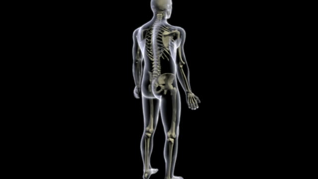 Animation depicting a rotation of the skeletal system within a transparent body. The camera then zooms in on the upper body.