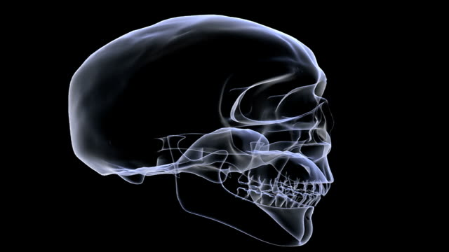 Animation depicting a rotation of the skull as it fades back and forth between a solid and an x-ray look.