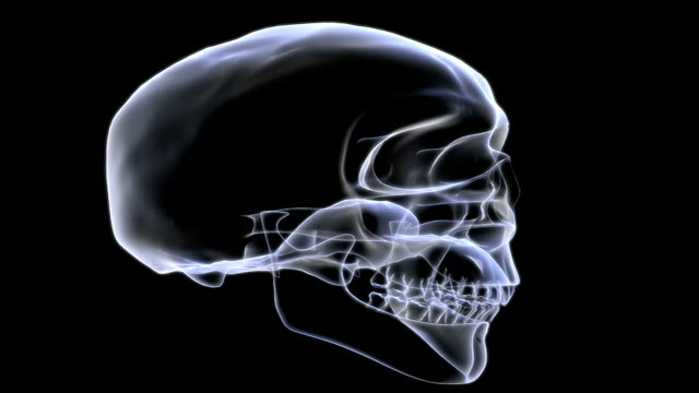 Animation depicting a rotation of the skull which has an x-ray look. The jaw opens and closes as the animation progresses.