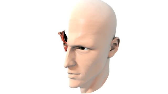 animation depicting a sectioned head showing the pharynx and nasopharynx. the ear anatomy can be seen where the right section of the head has been cut away. - farynx stock videos and b-roll footage