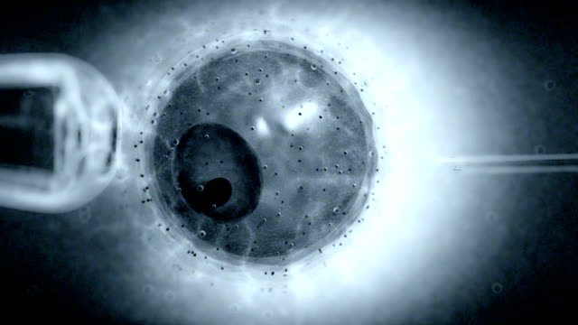 animation depicting a visualization of an ovum undergoing in vitro fertilization treatment or ivf. - menschliche fruchtbarkeit stock-videos und b-roll-filmmaterial