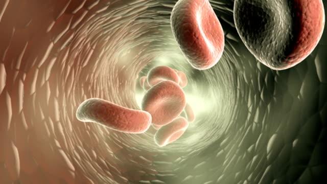 vídeos y material grabado en eventos de stock de animation depicting blood flow. - arteria humana