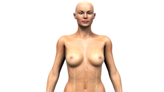 animation depicting cancerous tumor of the breast. the camera zooms toward the breast as the skin fades, revealing the breast anatomy and tumor. it then zooms to a microscopic view of the cancer itsel - ligament stock videos and b-roll footage