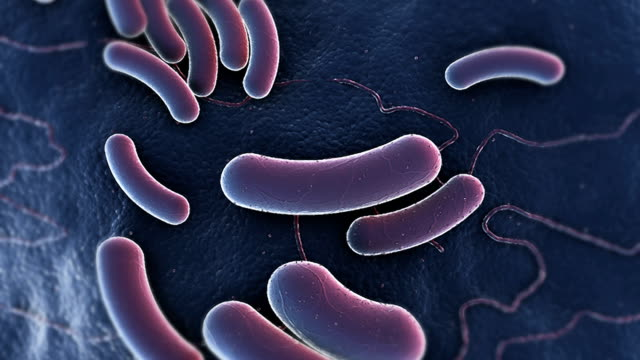 animation depicting e coli bacteria at a microscopic level. the camera rotates as it zooms and changes focus to settle close to the bacteria. - eschericia coli stock-videos und b-roll-filmmaterial