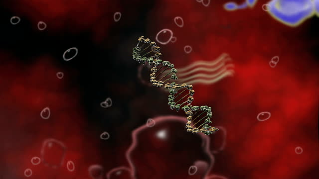 animation depicting hiv proviral dna entering the nucleus of a human helper t-cell. - t cell stock videos & royalty-free footage
