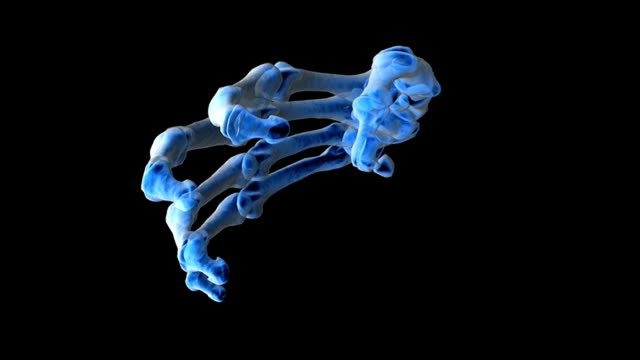 Animation depicting rotation of the bones of the hand, in X-Ray view, with fingers opening to demonstrate movement.