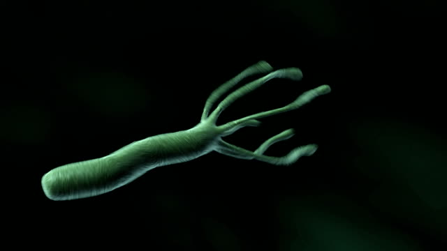 animation depicting the bacteria helicobacter pylori. the camera follows the path of the bacteria as it travels. - struttura cellulare video stock e b–roll