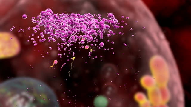 animation depicting the dissolution of the hiv capsid in a helper t cell, resulting in the release of hiv rna and reverse transcriptase. - t cell stock videos & royalty-free footage