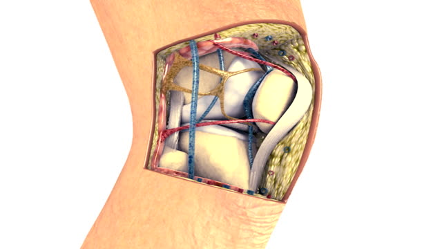 animation depicting the knee with a section taken out to show the internal knee anatomy. - メディカルイラスト点の映像素材/bロール