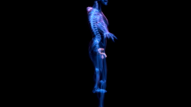 stockvideo's en b-roll-footage met animation depicting the male reproductive system within the male body with skeletal system present.  all elements of the animation have an x-ray style look to them. - blaas urinewegstelsel