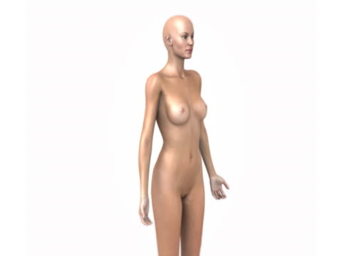 animation depicting the organs and glands of the female endocrine system fading up within a female body. as this happens the camera pans from left to right. - thyroid gland stock videos & royalty-free footage
