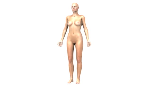 animation depicting the organs and glands of the female endocrine system.  all elements of the animation are in a stylized view.  the camera slowly zooms in while the body fades revealing the endocrin - weibliche figur stock-videos und b-roll-filmmaterial