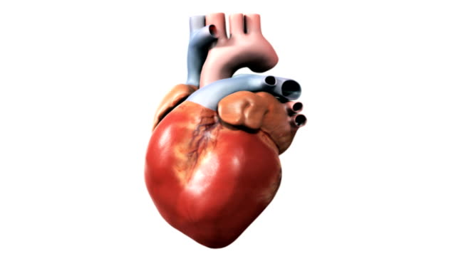 animation depicting the process of a coronary angioplasty procedure. the camera begins on a shot of the heart which fades as a cutaway section of the artery zooms to fill the screen. the  angioplasty - coronary artery stock videos & royalty-free footage