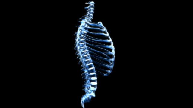 animation depicting the ribcage and spine in x-ray view. the camera rotates around the object 360 degrees. - メディカルイラスト点の映像素材/bロール