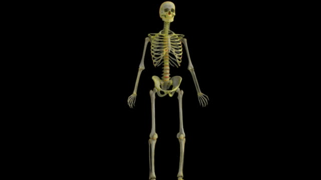 animation depicting the skeleton which fades into x-ray style. the camera swings 180 degrees and back again as it zooms toward the skeleton. - メディカルイラスト点の映像素材/bロール