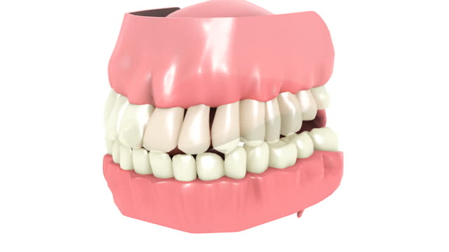 animation depicting the teeth and gums. the camera  rotates as the upper palate and teeth fade down to reveal the tongue and bottom teeth. - människomun bildbanksvideor och videomaterial från bakom kulisserna