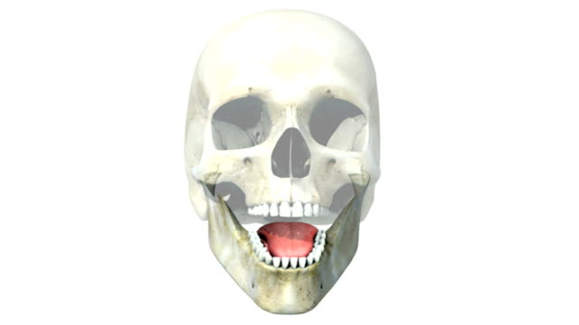 animation depicting the teeth. the skull and tongue are also visible but fade out as the camera pans and zooms to a close-up of the teeth. - digital animation stock videos & royalty-free footage