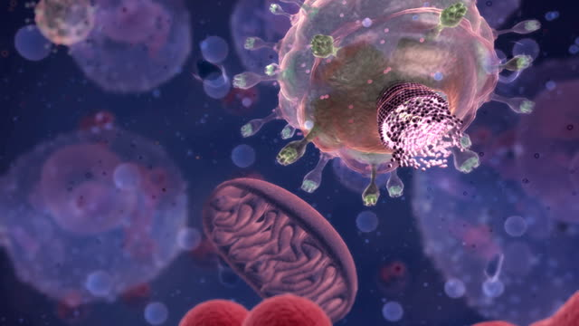 animation depicts a cellular view of the hiv capsid entering the human helper t-cell. - t cell stock videos & royalty-free footage