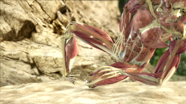 a 3d animation depicts a human falling from a great height and the impact on the muscle, nerves and bones. - human muscle stock videos & royalty-free footage