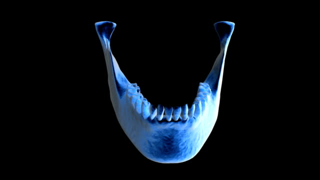 animation depicts a small rotation of the lower jaw and teeth, in x-ray view. - kiefer stock-videos und b-roll-filmmaterial