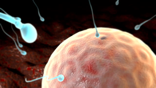 animation depicts an ovum being fertilized by sperm at a cellular level. - sperm stock videos & royalty-free footage