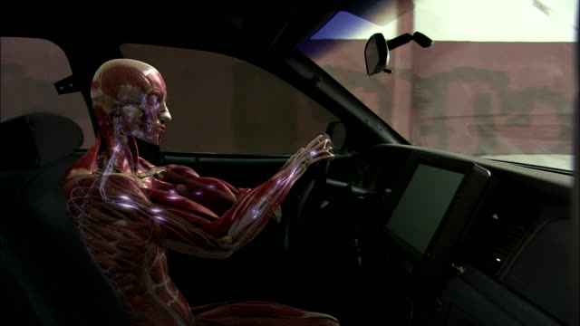a 3d animation depicts the messages of the central nervous system to the human body while driving. - human nervous system stock videos & royalty-free footage