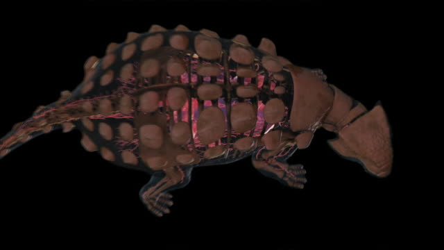 A 3D animation depicts the skeletal system and armor of an Ankylosaurus.