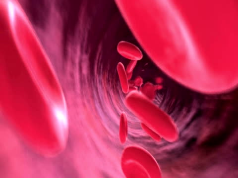 animation endoscopic pov of blood corpuscles moving through blood vessels - blutkreislauf kardiovaskuläres system stock-videos und b-roll-filmmaterial