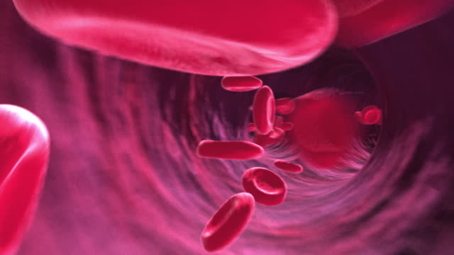 animation endoscopic pov of blood corpuscles moving through blood vessels - animazione biomedica video stock e b–roll