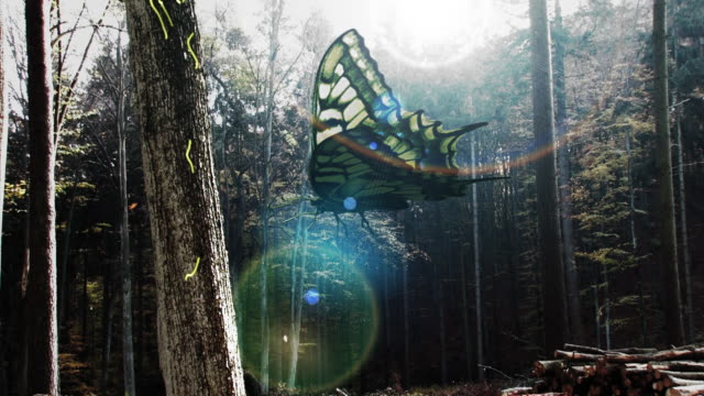 animation of a butterfly in wicked forest - paranormal stock videos & royalty-free footage