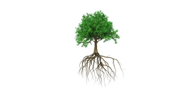 animation of a colored growing tree with roots - tree stock videos & royalty-free footage