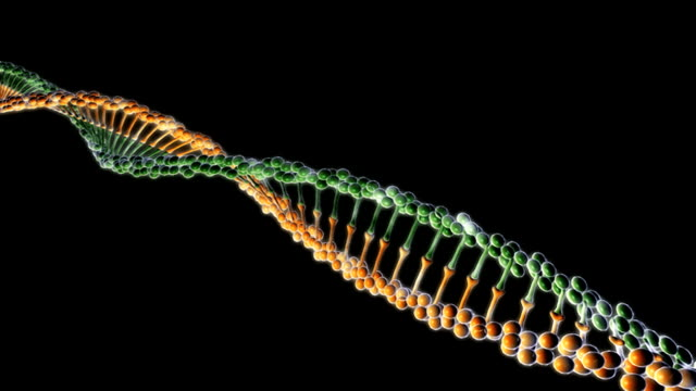animation of a dna helix unraveling.  the camera zooms out as the dna helix is rotating and unraveling. - helix model stock videos and b-roll footage